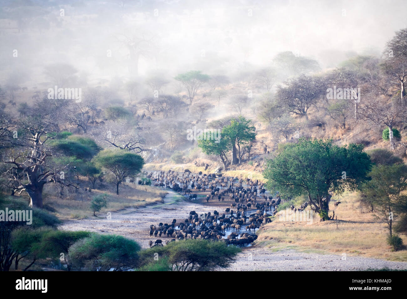 Wildbeest crossing river in Tarangire National park Tanzania with dust in the air and blue sky - Stock Image
