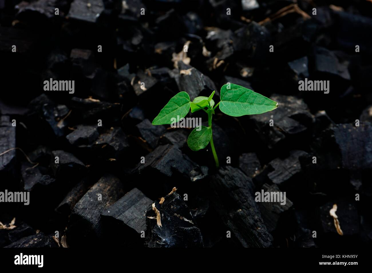 a plant : survival to life - Stock Image
