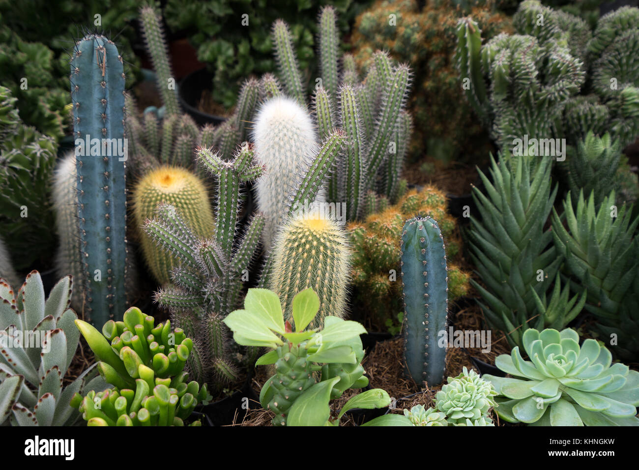 potted plants variety - Stock Image