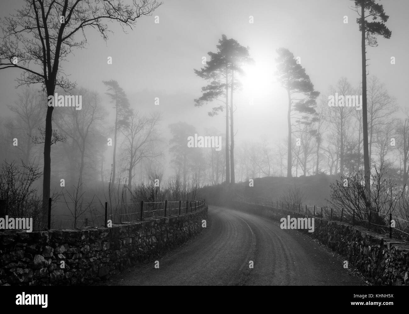 A black&white scene of a road leading to the sun rising in the mist between two pine trees with a stone fences - Stock Image