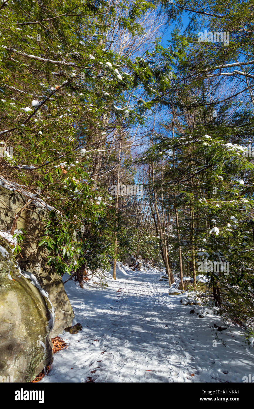 Trail in Blackwater Falls State Park, Allegheny Mountains, West Virginia, USA - Stock Image