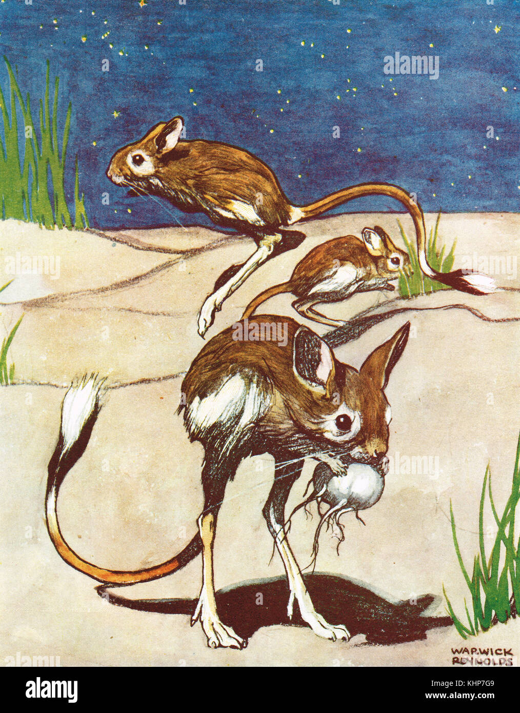 Jerboa, hopping desert rodents - Stock Image