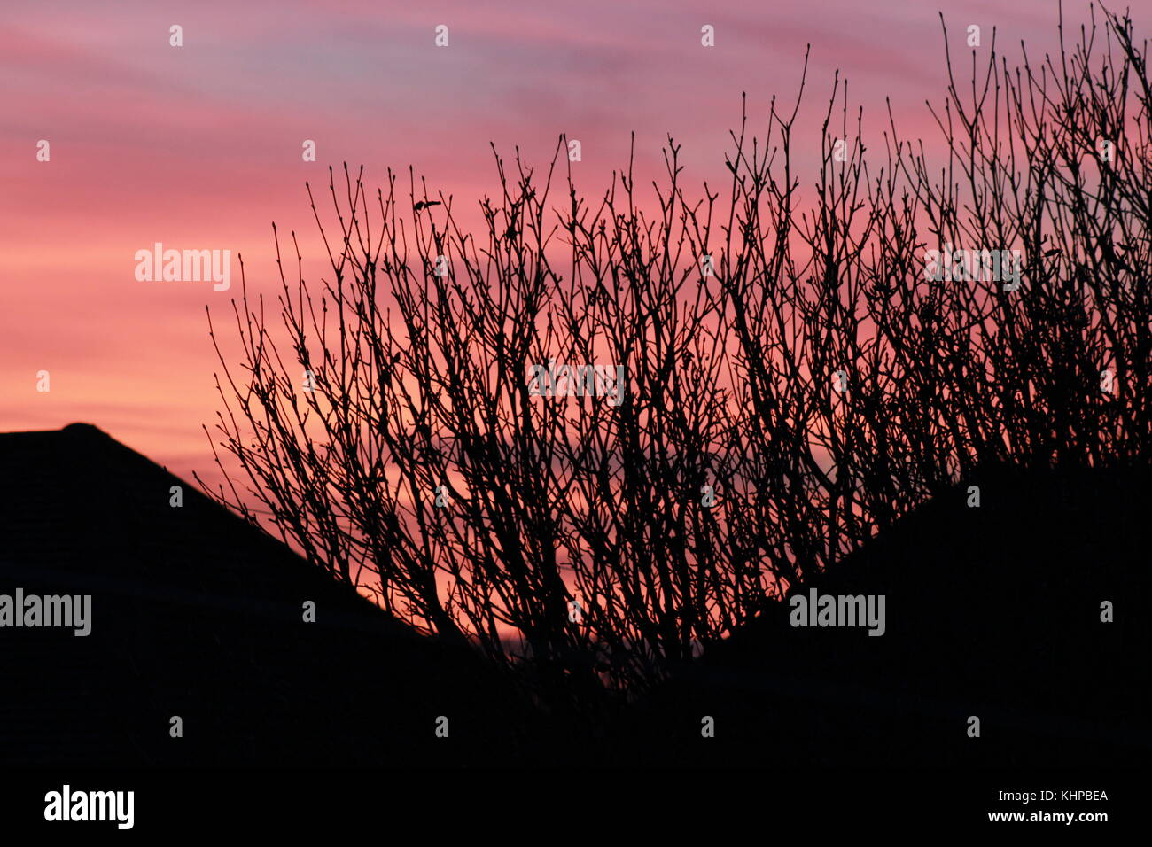 orange sunset through bare trees over roof tops - Stock Image