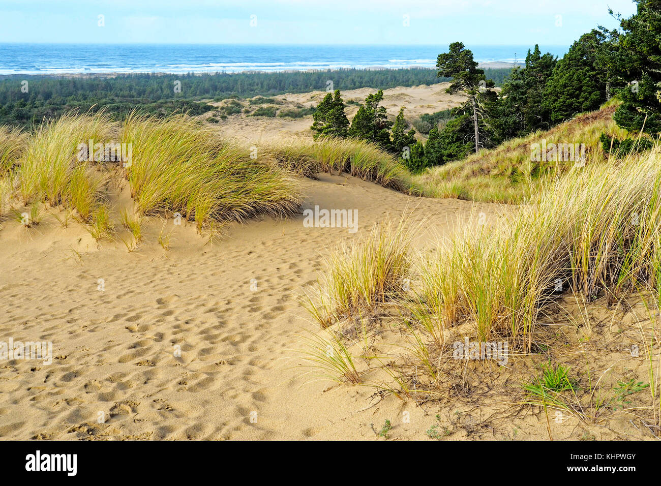 Oregon Dunes National Recreation Area along Pacific Coast Scenic Byway. - Stock Image