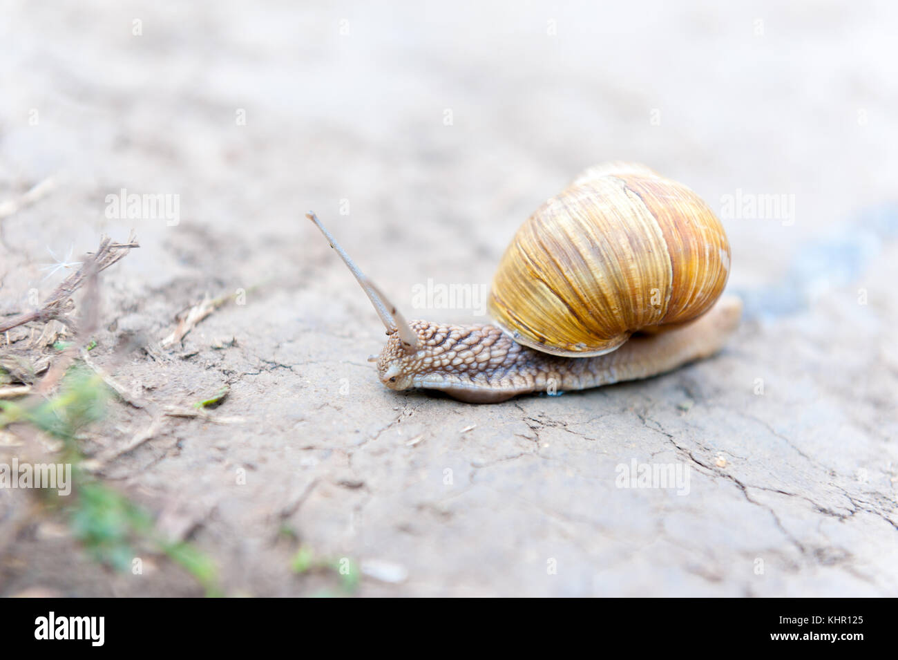 Snail crawling on the path Stock Photo