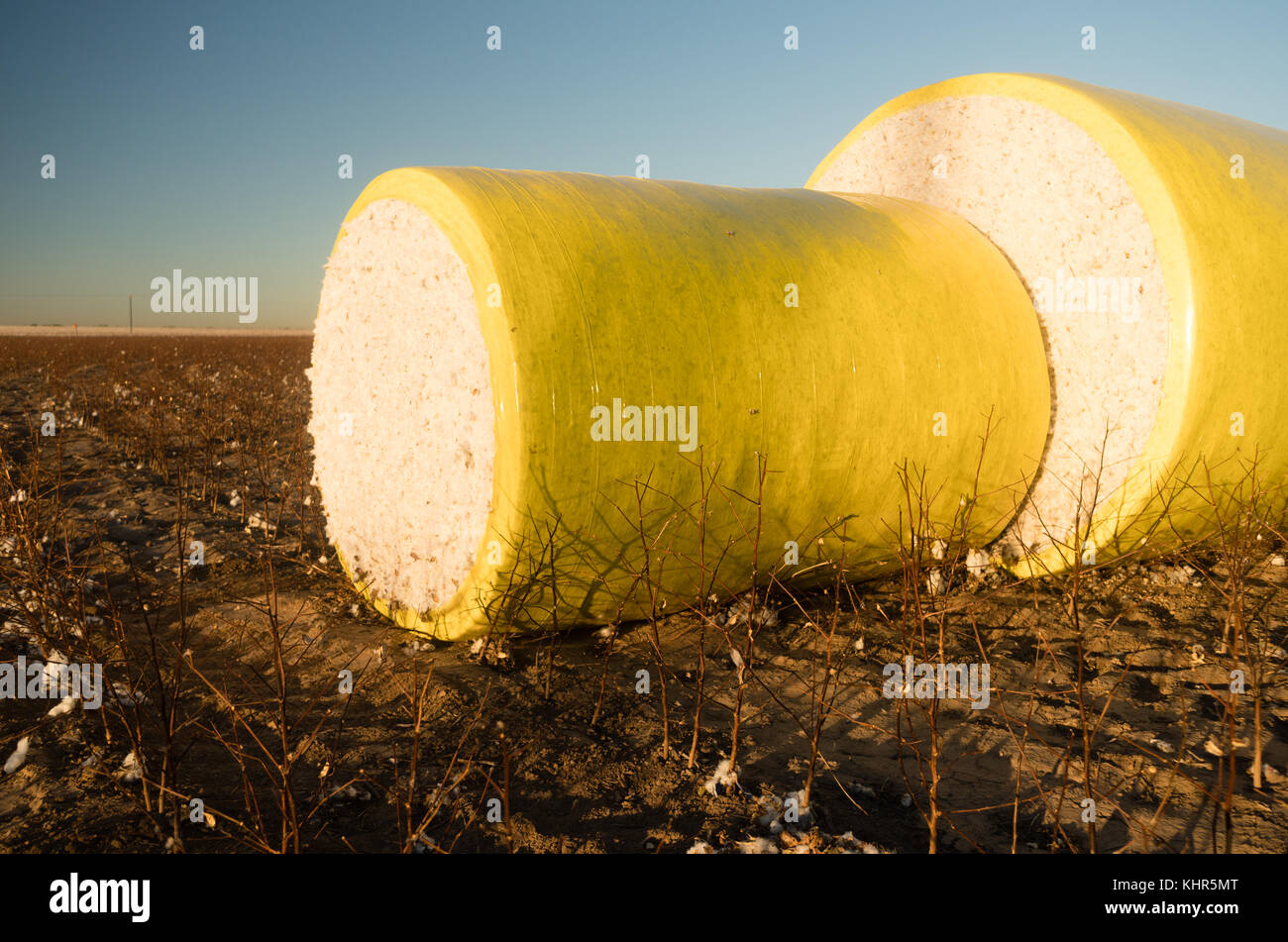 Tarp Covers Fresh Cotton Harvest Farm Field Agriculture - Stock Image