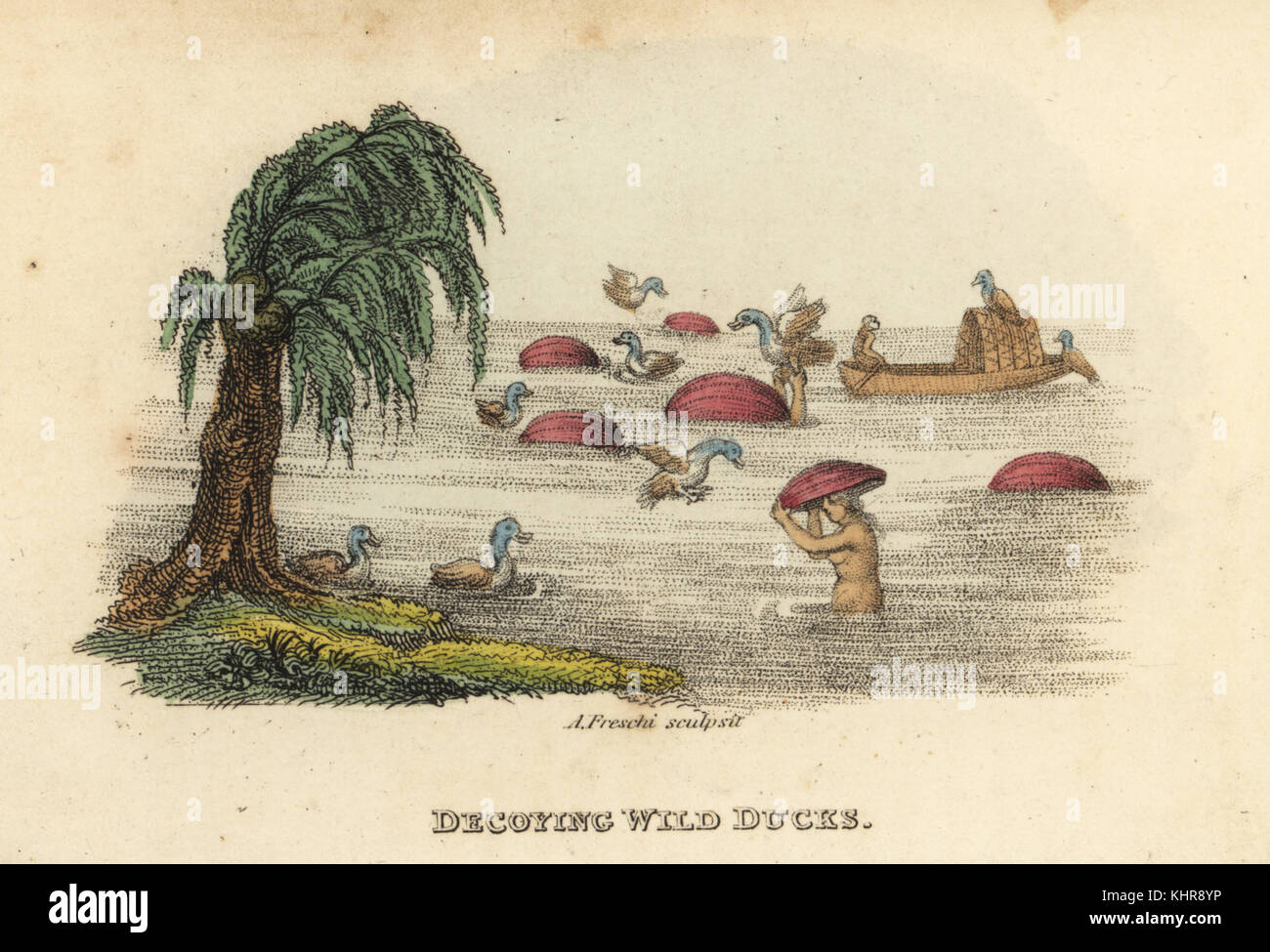 Chinese men hunting wild ducks with decoy gourd hats in the river, Qing Dynasty. Handcoloured copperplate engraving - Stock Image