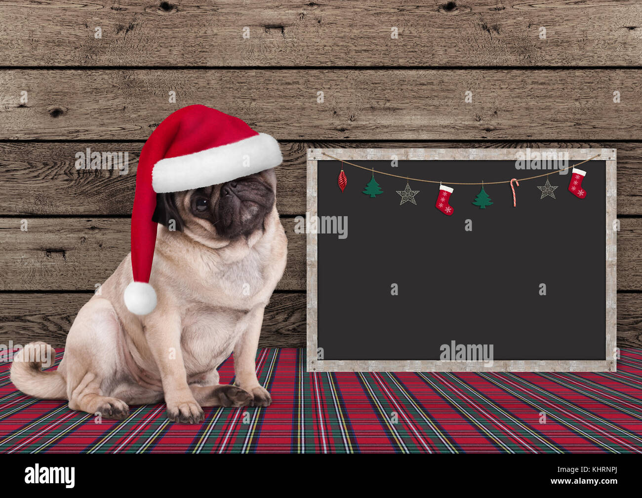 cute Christmas  pug puppy dog with santa hat and blackboard on wooden background - Stock Image