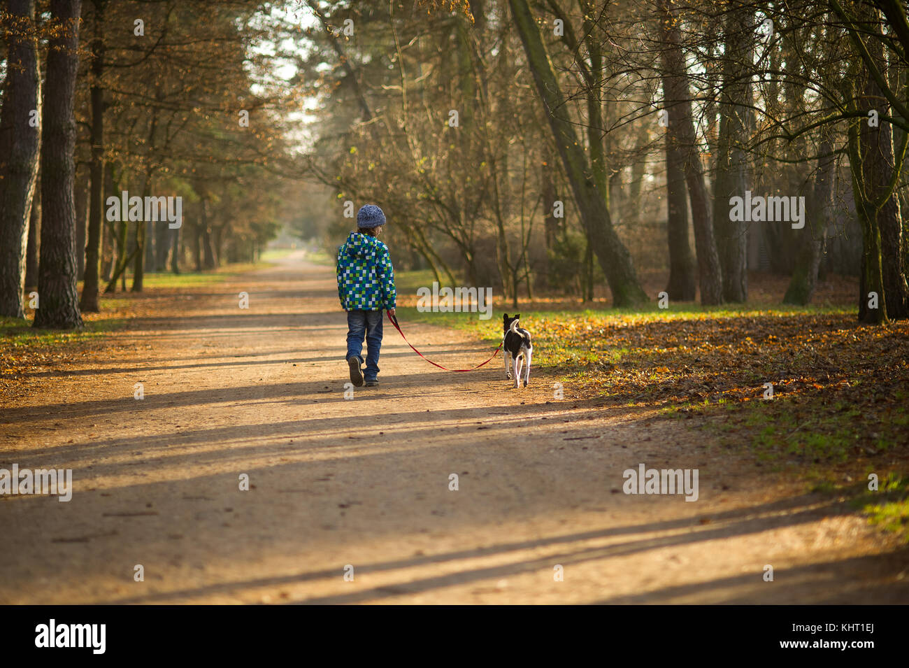 Boy 10-11 years walking the dog in autumn Park. He is holding the leash of a black-and-white cute dog. - Stock Image