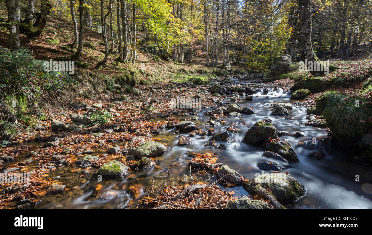 forest in autumn in the Pyrenees Stock Photo