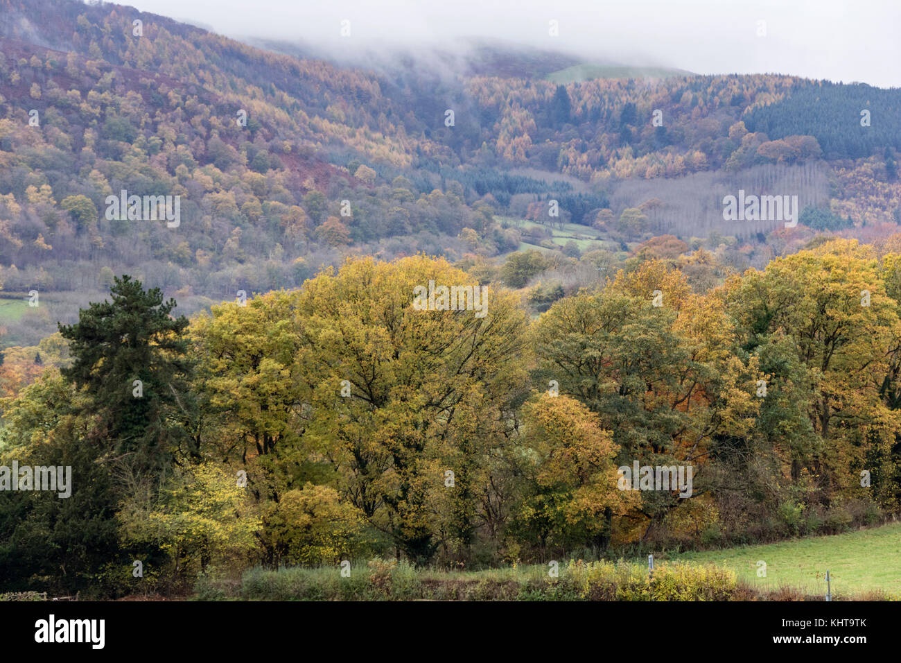 Autumn in the Dee Valley near Llangollen, North Wales, UK Stock Photo