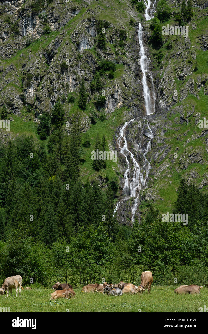 Pasture with cows on a alp with waterfall in Bavaria Germany - Stock Image
