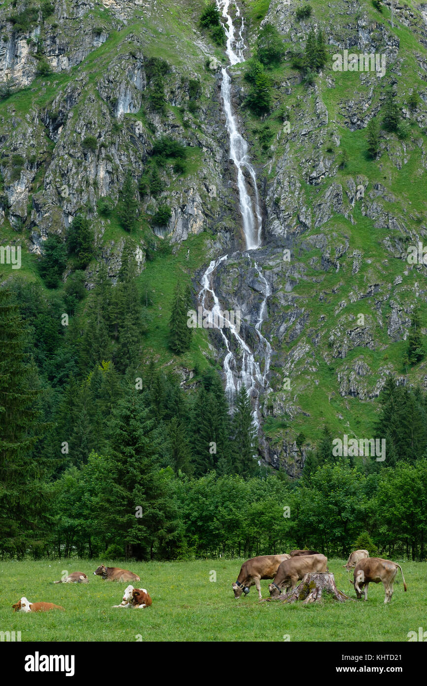 Waterfall in valley of Oytal with cows in foreground on a meadow - Stock Image