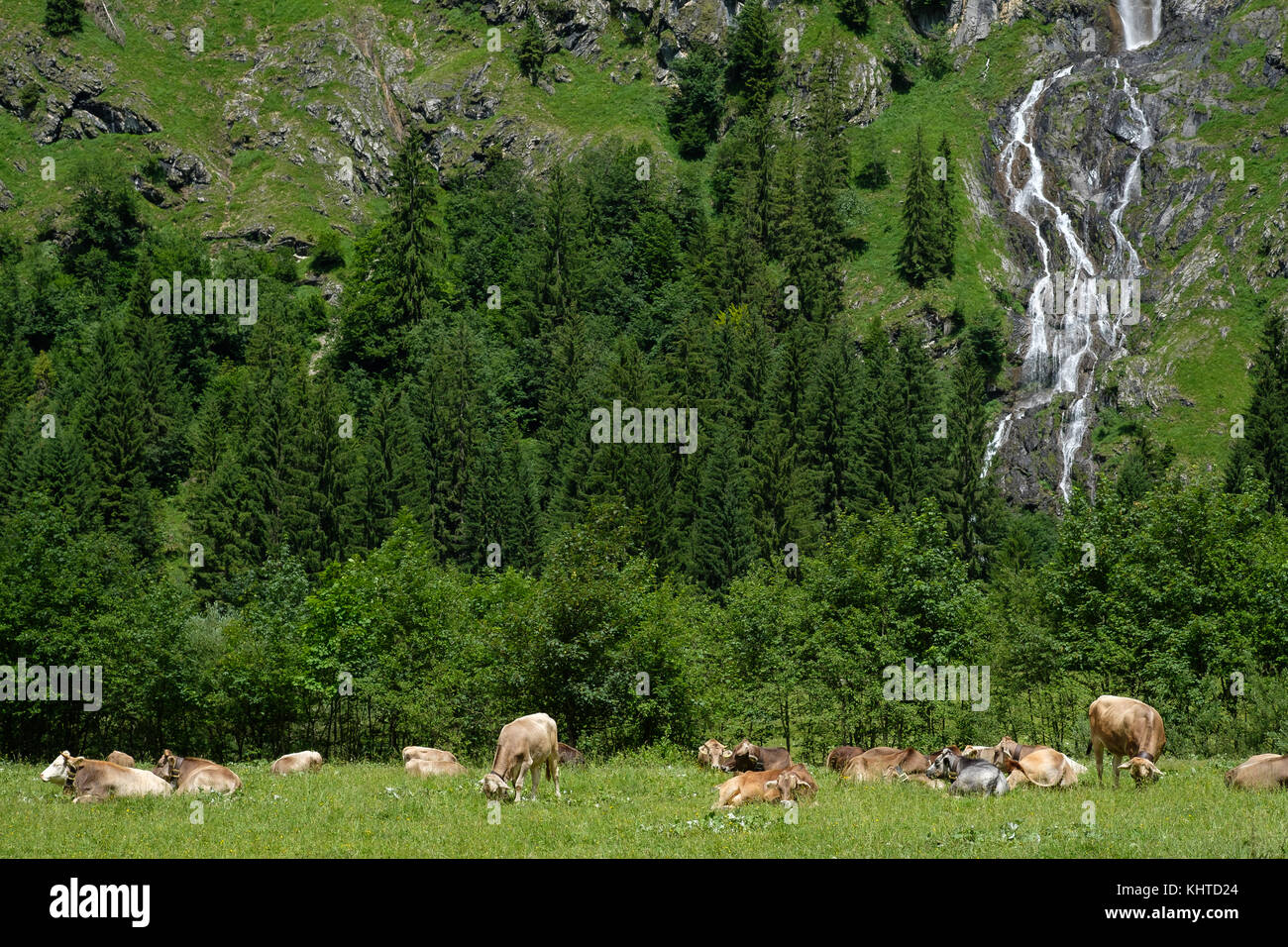 Alp in valley of Oytal Bavaria Germany with cattles, forest and waterfall - Stock Image
