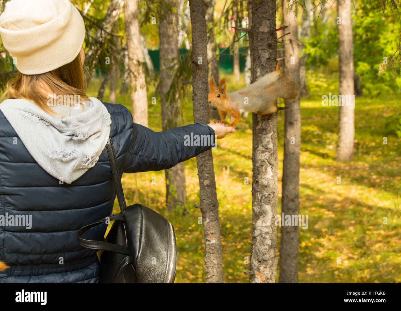 Girl hipster feeding a grey squirrel with a fluffy tail in autumn Park. - Stock Image
