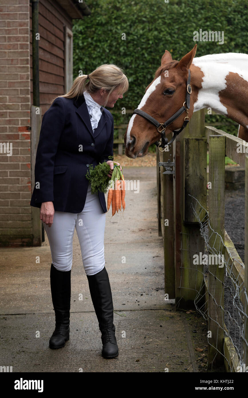 Smartly dressed female rider holding a bunch of carrots to tempt her Skewbald horse - Stock Image