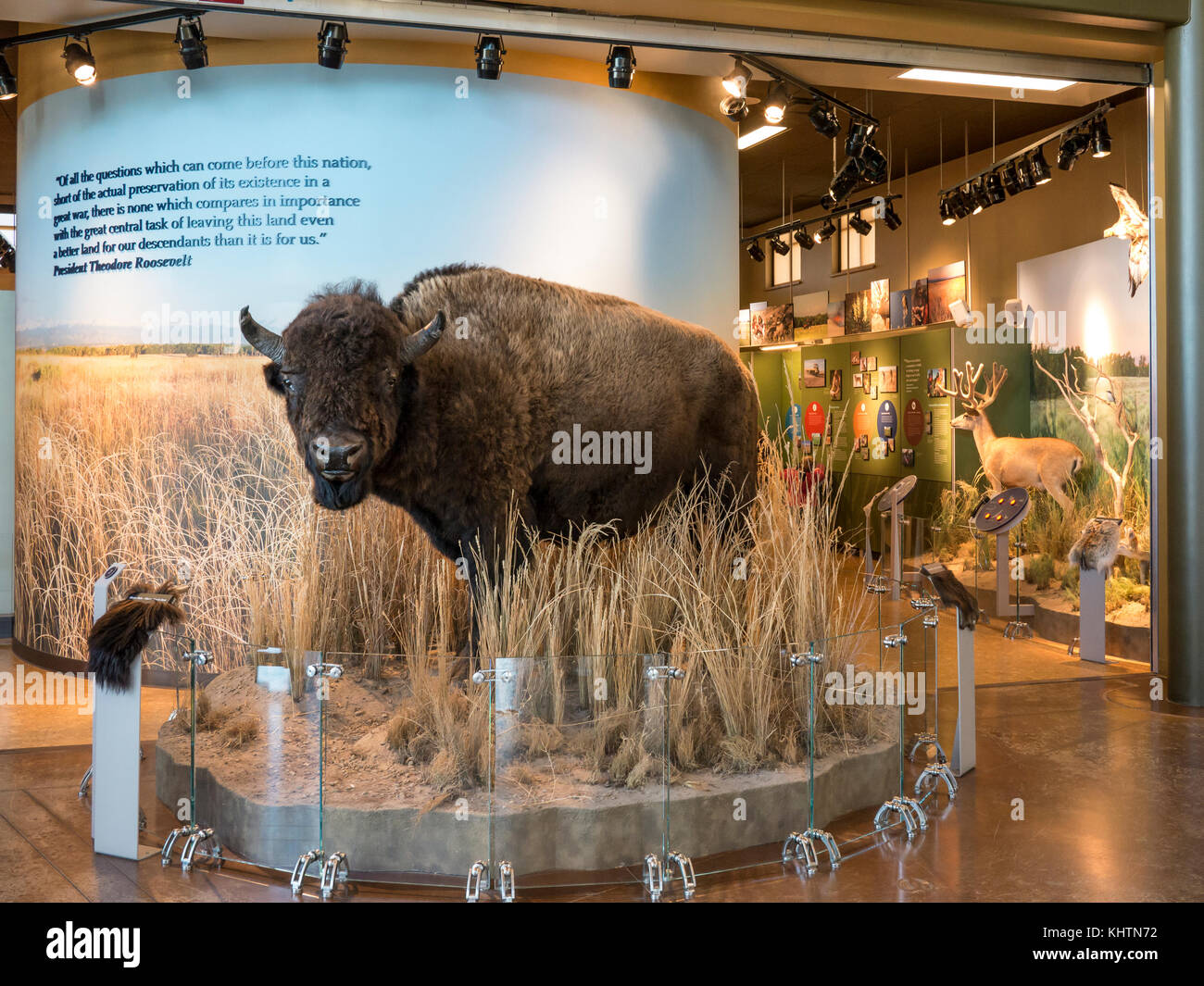 Displays inside the visitor center, Rocky Mountain Arsenal National Wildlife Refuge, Commerce City, Colorado. - Stock Image