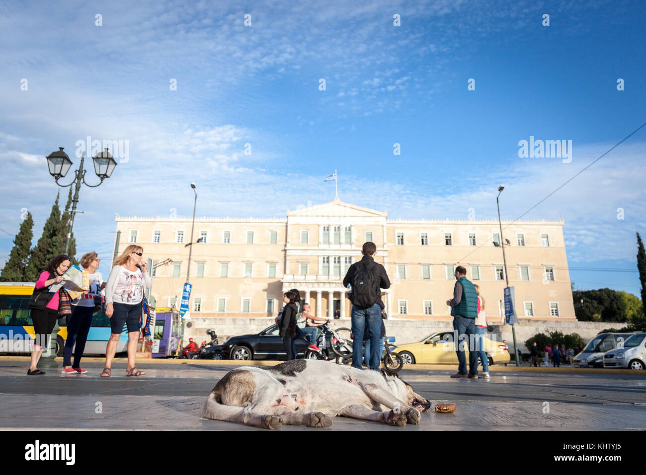 ATHENS, GREECE - NOVEMBER 3, 2017: Dog sleeping on Syntagma square, in front of the Parliament. This square is one - Stock Image