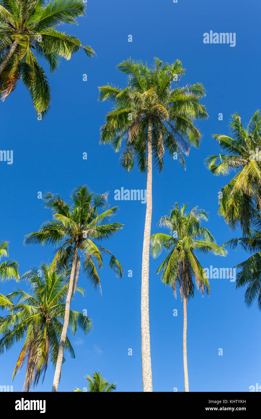 Palm trees against blue sky on Koh Kood island in Thailand - Stock Image