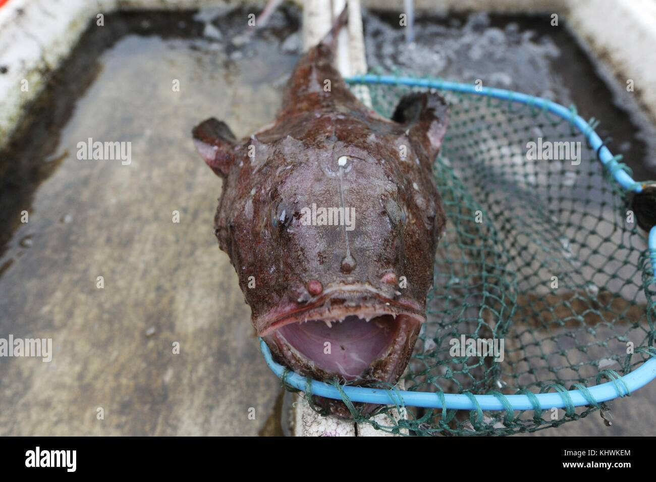 Weird Fish In China 7