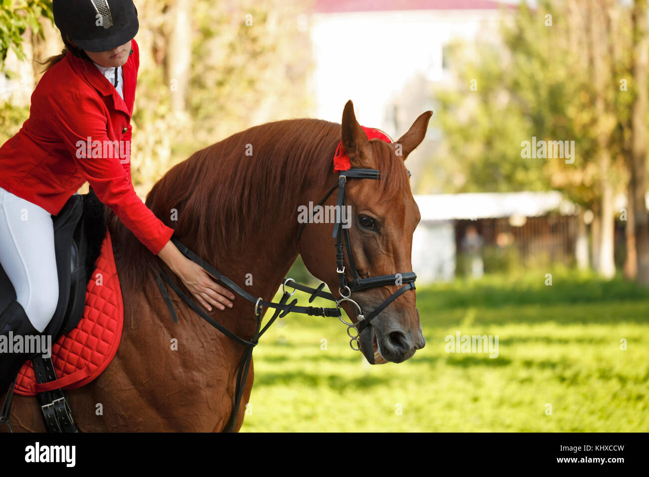 Girl jockey stroking a horse's neck outdoors. A pedigree horse for equestrian sport. - Stock Image