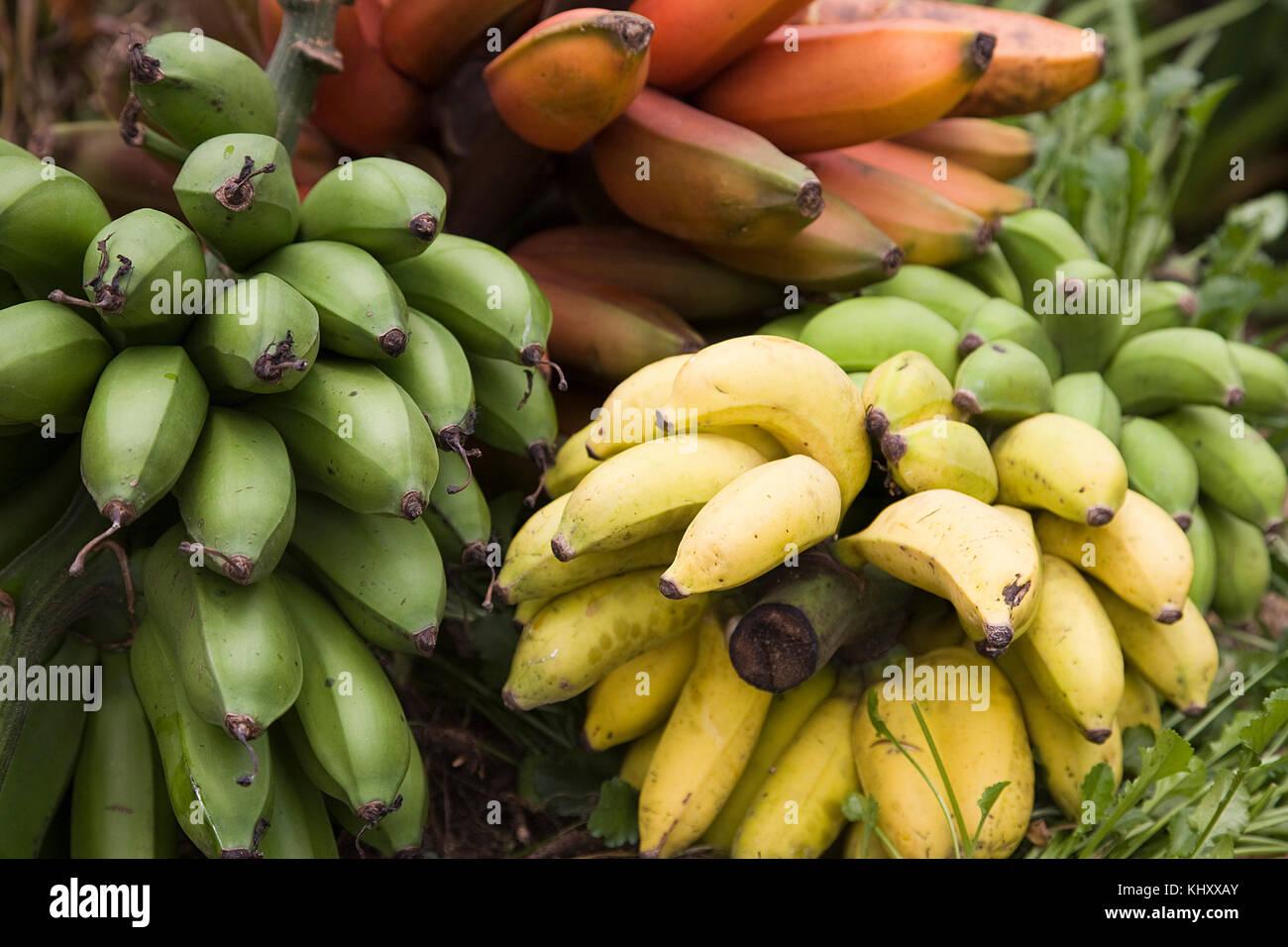 Bananas for cooking, close-up, Birayi, Bujumbura, Burundi, Africa - Stock Image