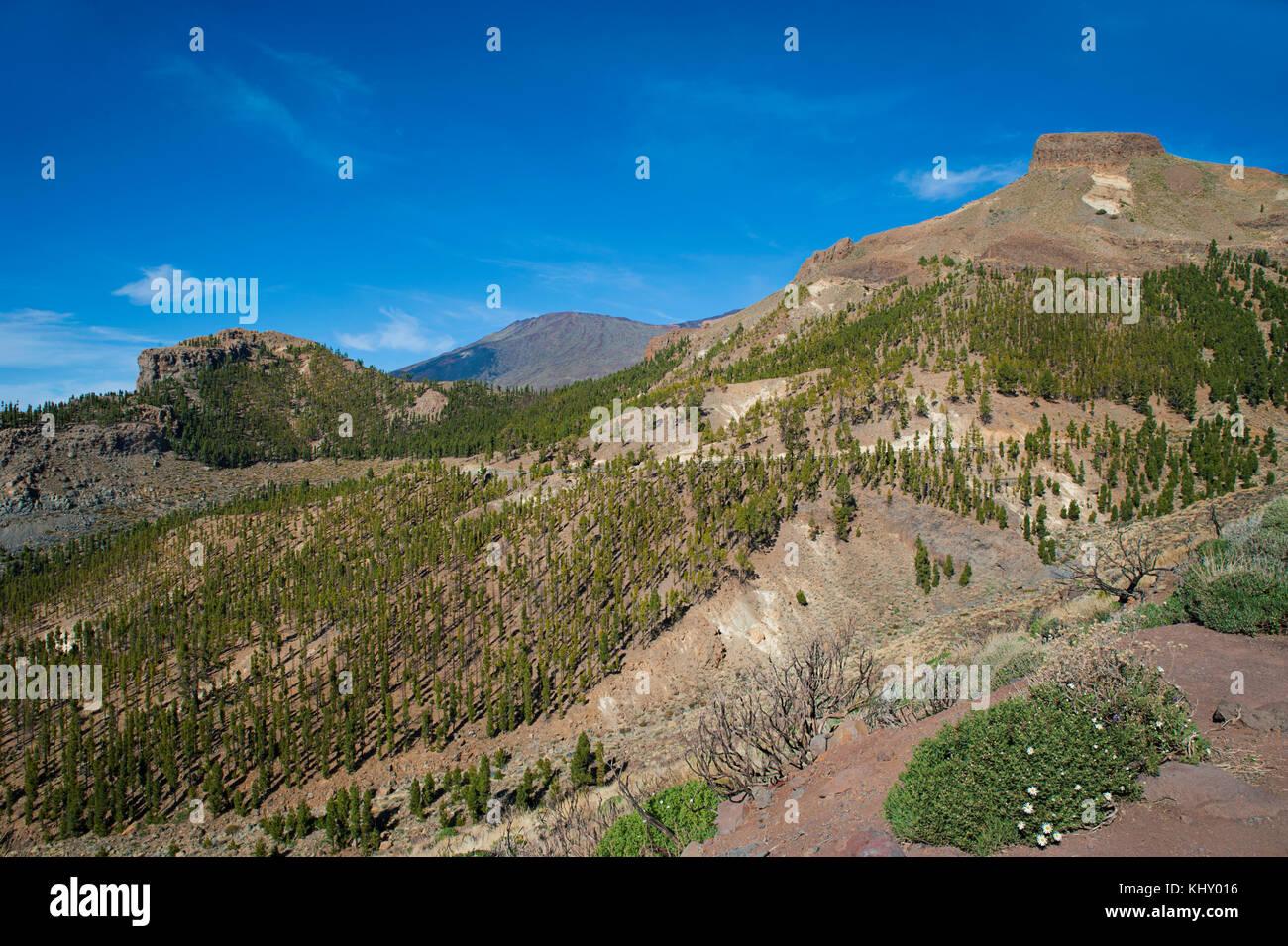 Familiar volcanic landscape of Teide National Park, Tenerife, Canary Islands, Spain - Stock Image