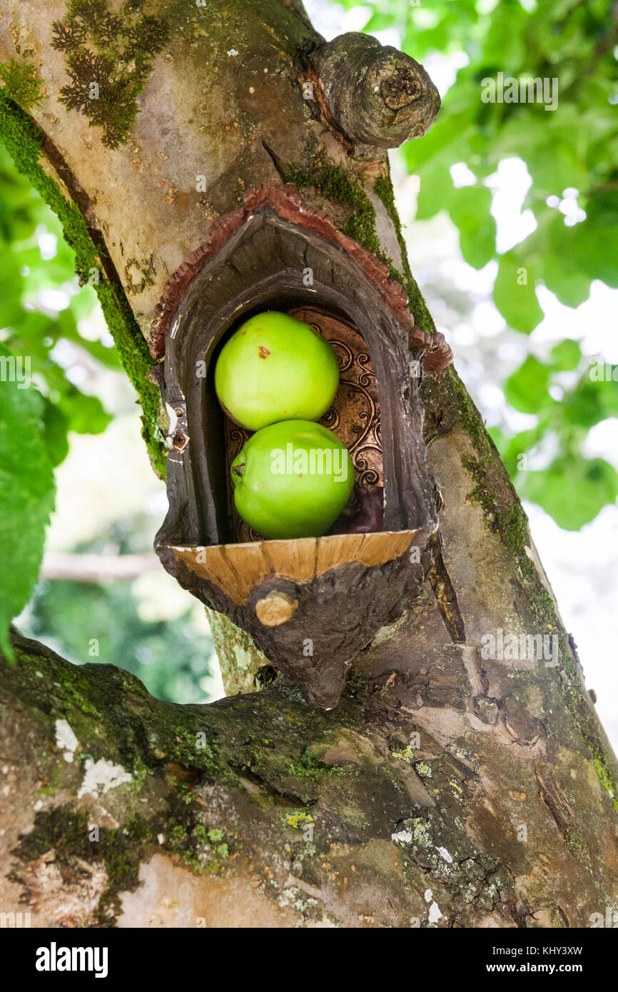 Apples Left As Food For The Fairies In A Fairy Door In The Trunk Of A