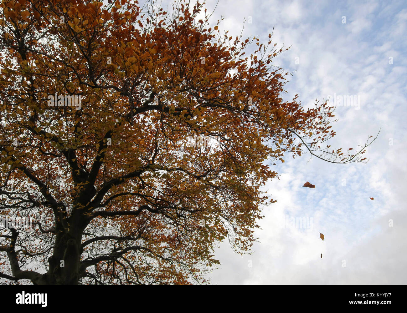 County Armagh Northern Ireland UK. 20 November 2017. UK weather - an increasing breeze has brought variabe cloud - Stock Image