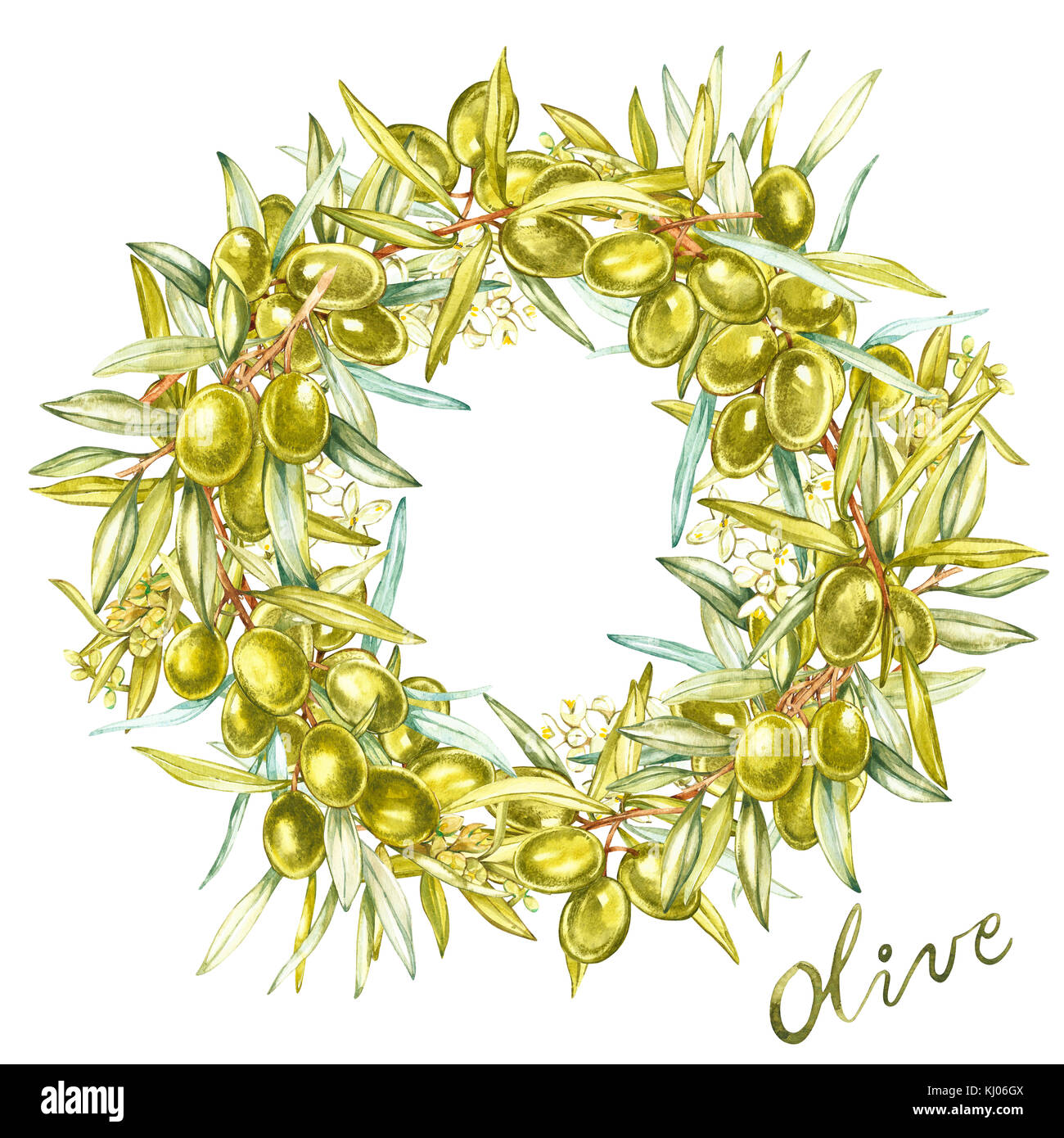 Watercolor colorful realistic wreath with ripe green olives on round white background. - Stock Image