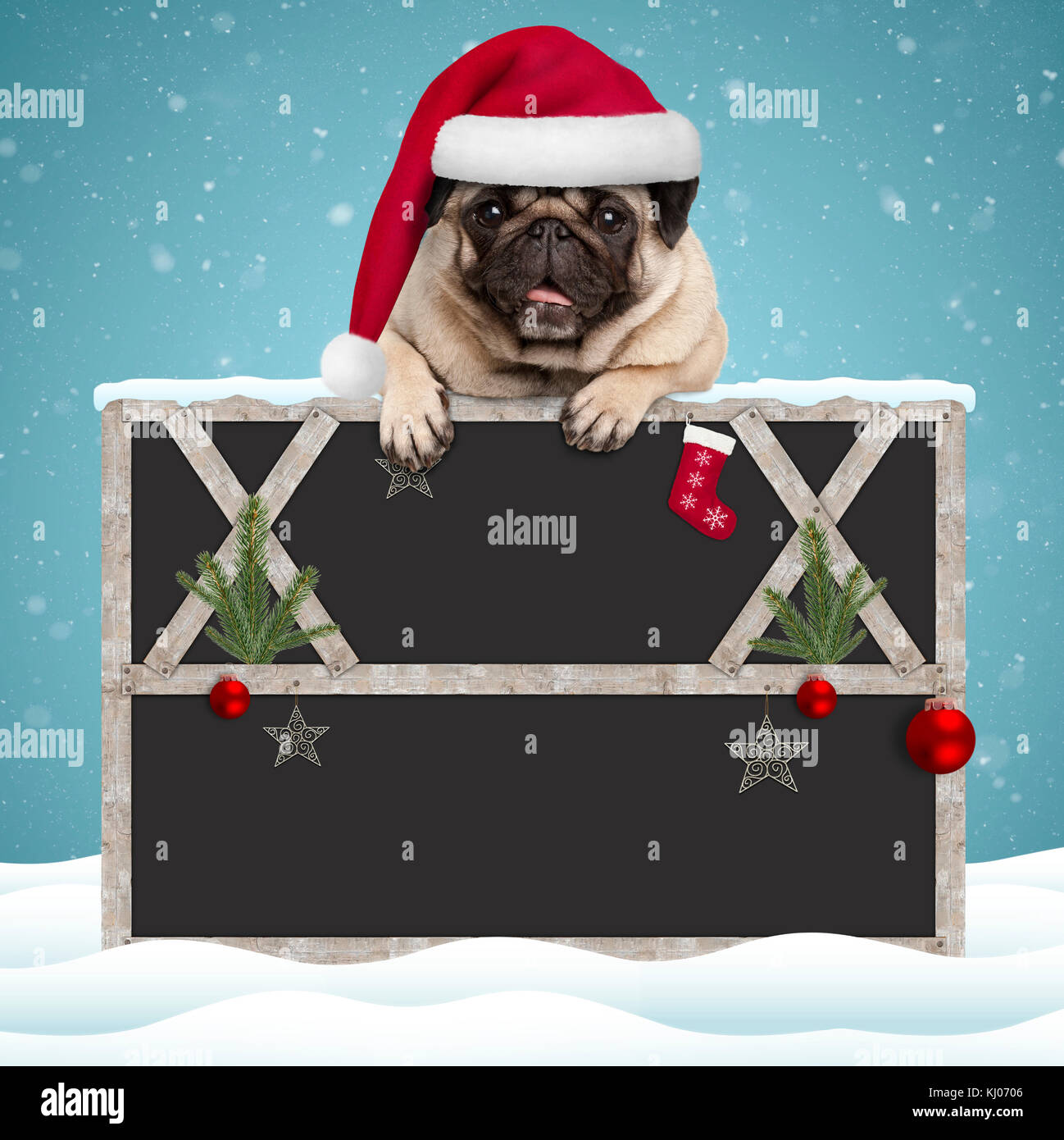 lovely Christmas pug puppy dog hanging with paws on blank blackboard sign with wooden frame and decoration, on snowy - Stock Image