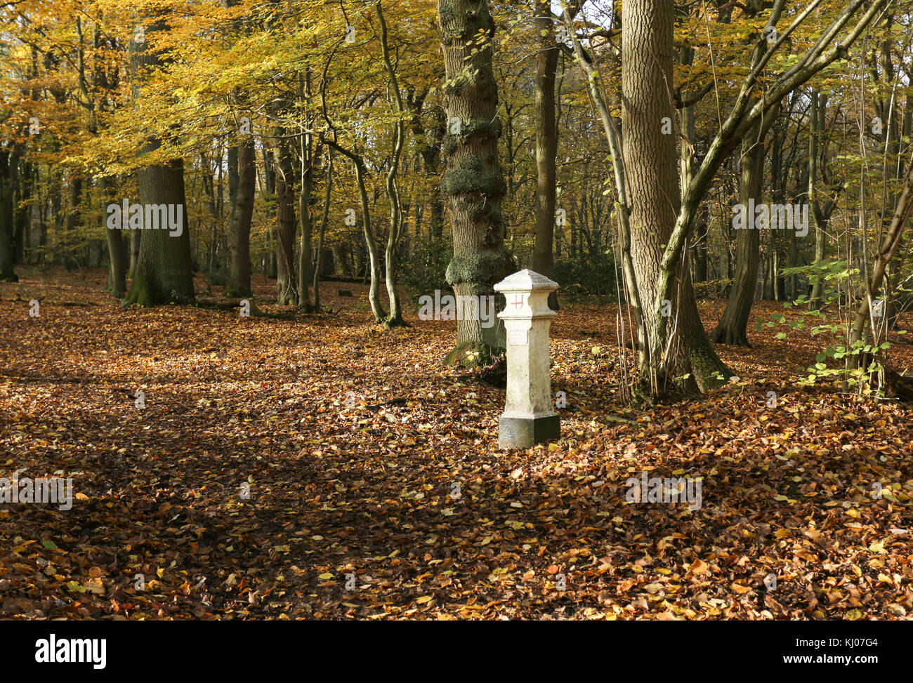 An Autumn Landscape view in Broxbourne Woods with a Coal Tax Post which is located deep in the woods. Stock Photo