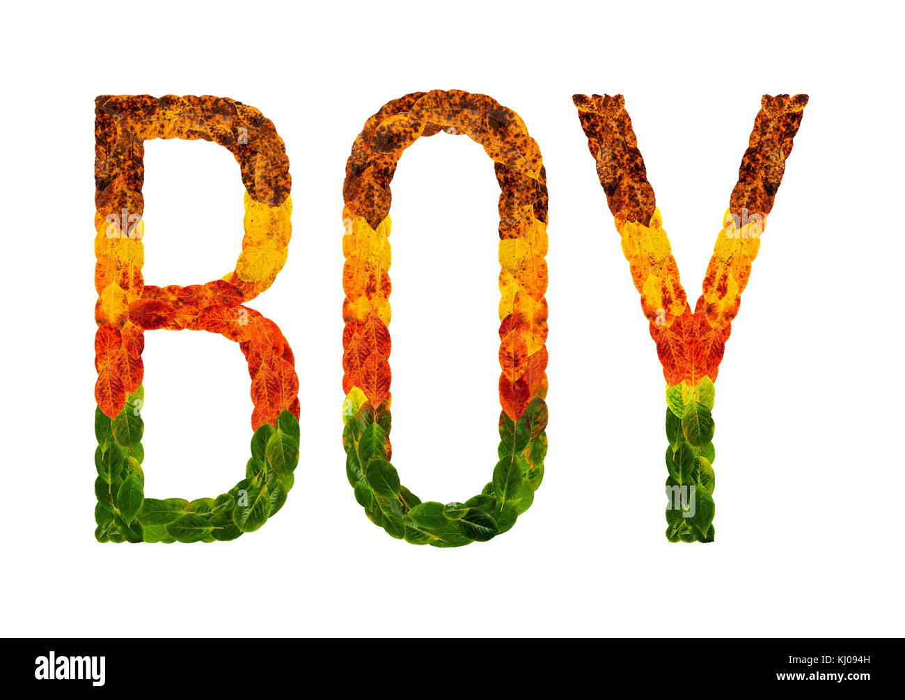 word Boy written with leaves white isolated background, banner for printing, creative illustration of colored leaves. - Stock Image