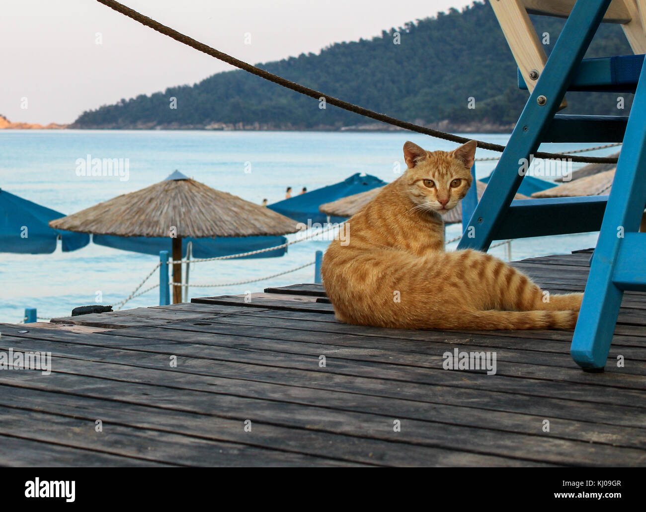 Cat at the beach - Stock Image