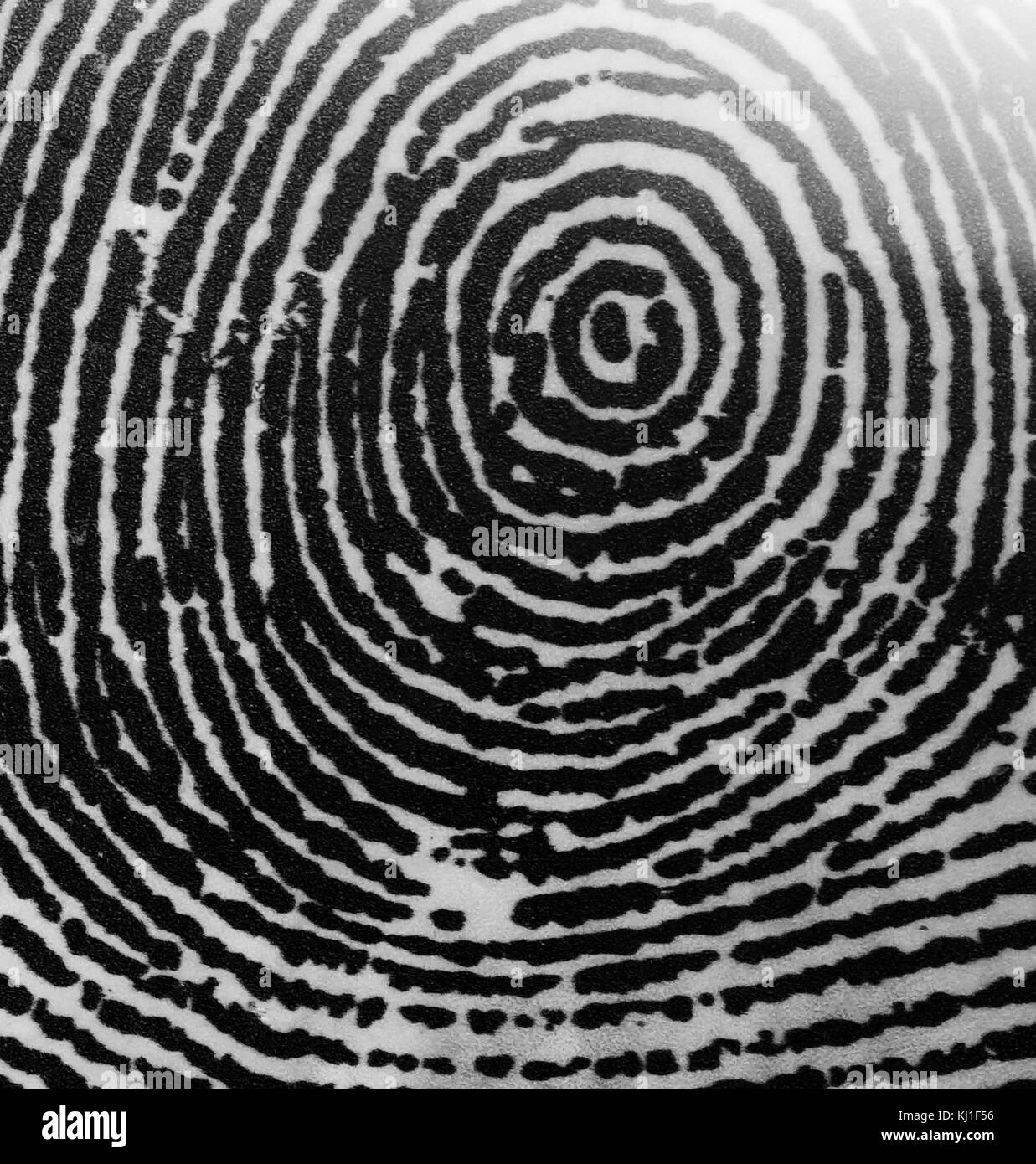A Whorl fingerprint. Fingerprints are an impression left by the friction ridges of a human finger. The recovery - Stock Image