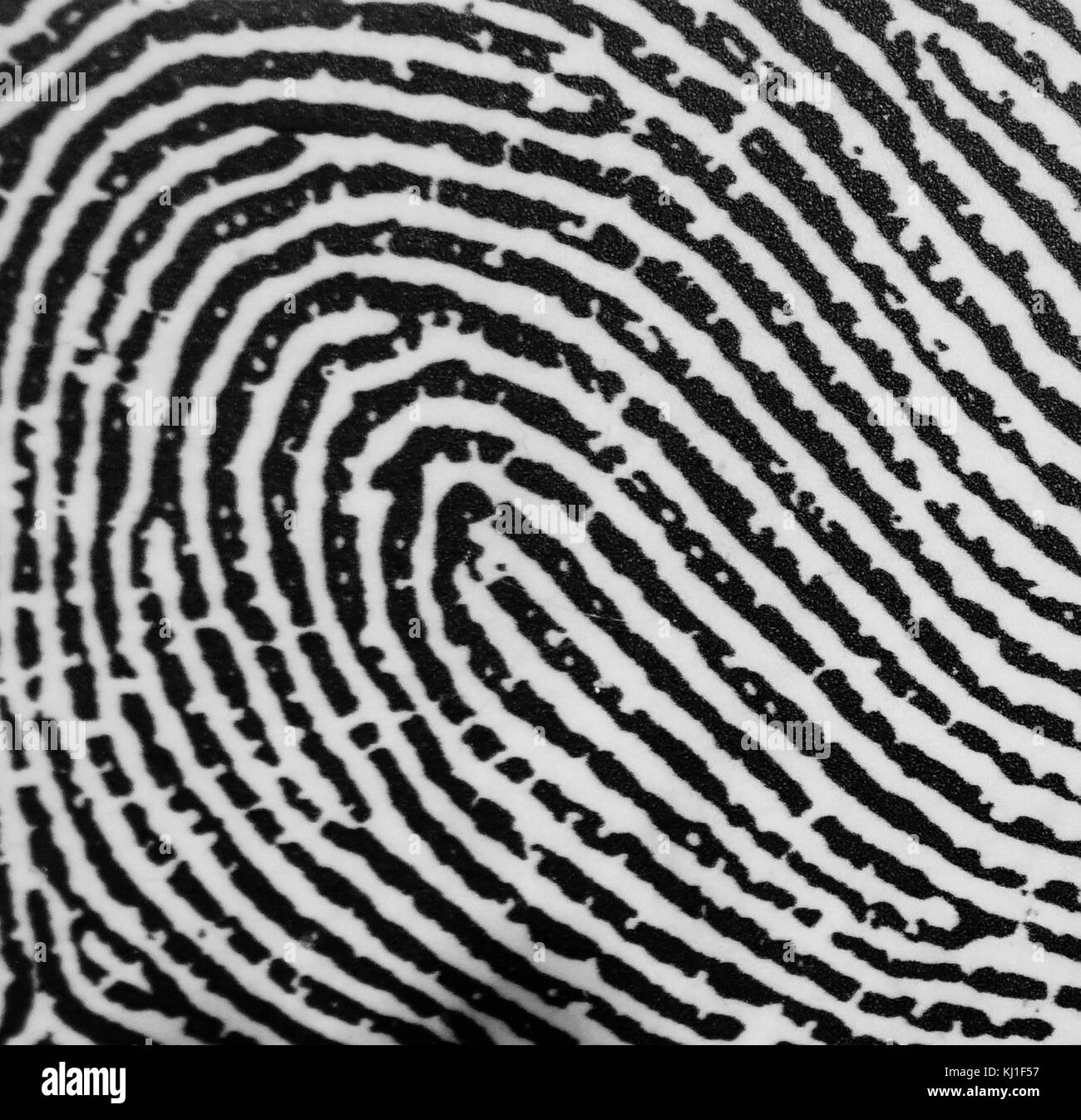 An Arch fingerprint. Fingerprints are an impression left by the friction ridges of a human finger. The recovery - Stock Image