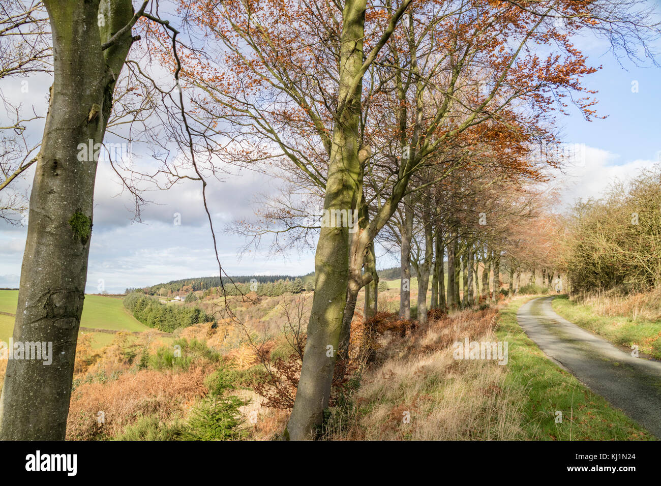 Welsh border country near the small rural town of Clun, Shropshire, England, UK - Stock Image