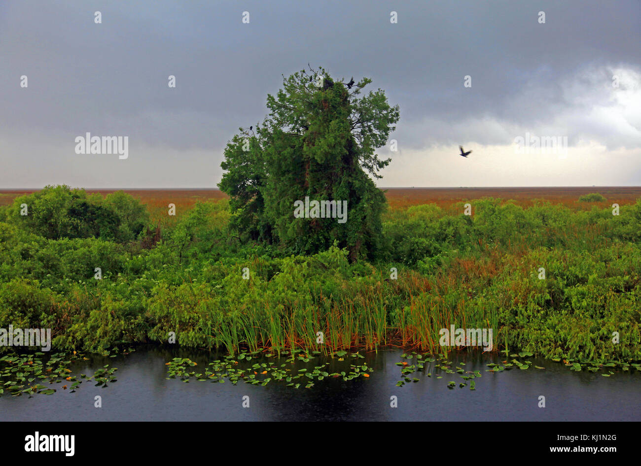 Florida Everglades - Stock Image