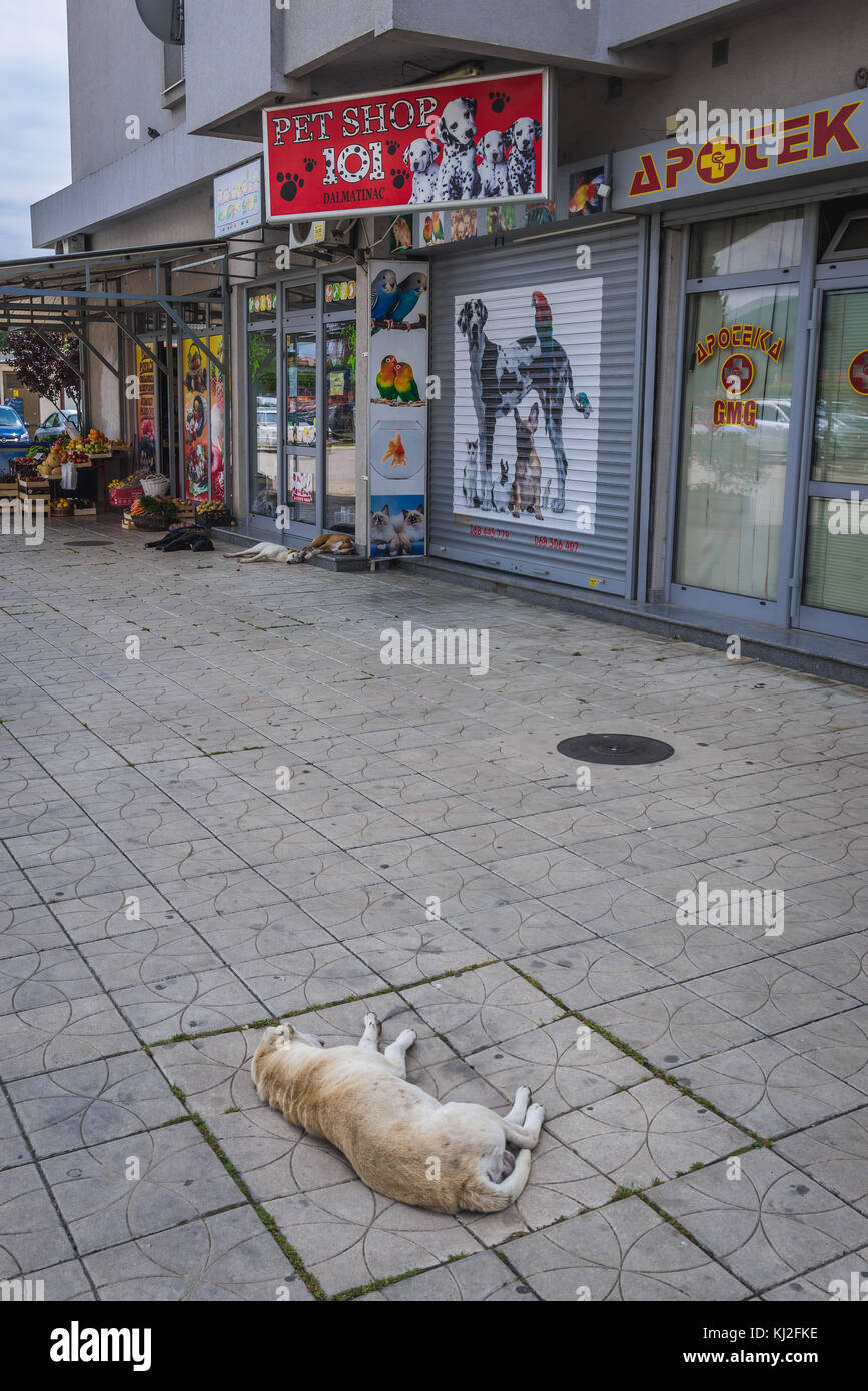 Stray dogs in front of pet shop in Bar coastal town in southern Montenegro - Stock Image