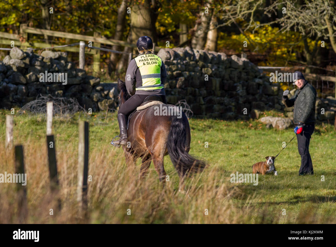 Horse and rider passing a dog walker in a field with a wide berth - Stock Image