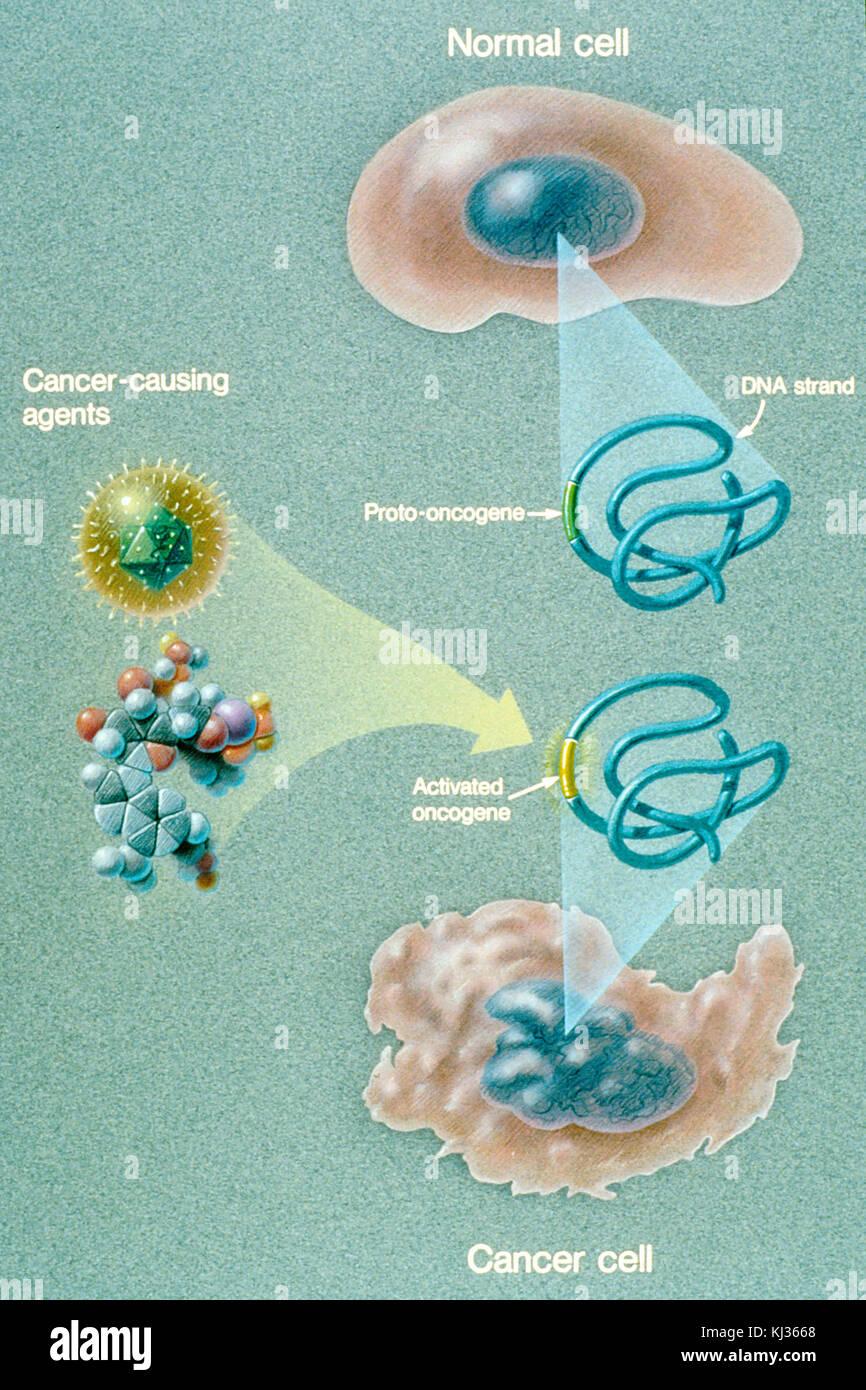 Oncogene activation illustration - Stock Image