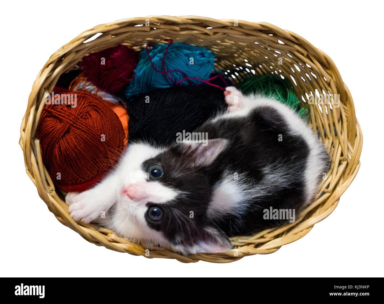 Kitten In Wicker Basket White Background Stock Photo