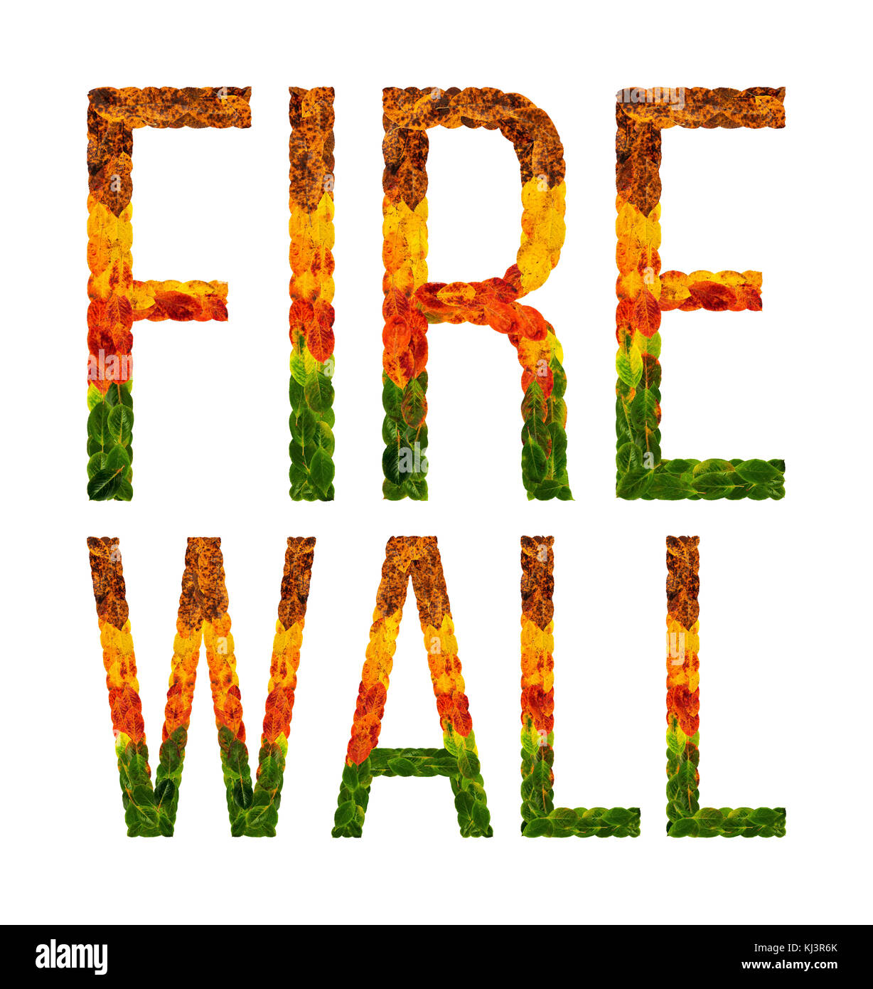 Word Fire Wall Written With Leaves White Isolated Background Banner For Printing Creative Illustration Of Colored
