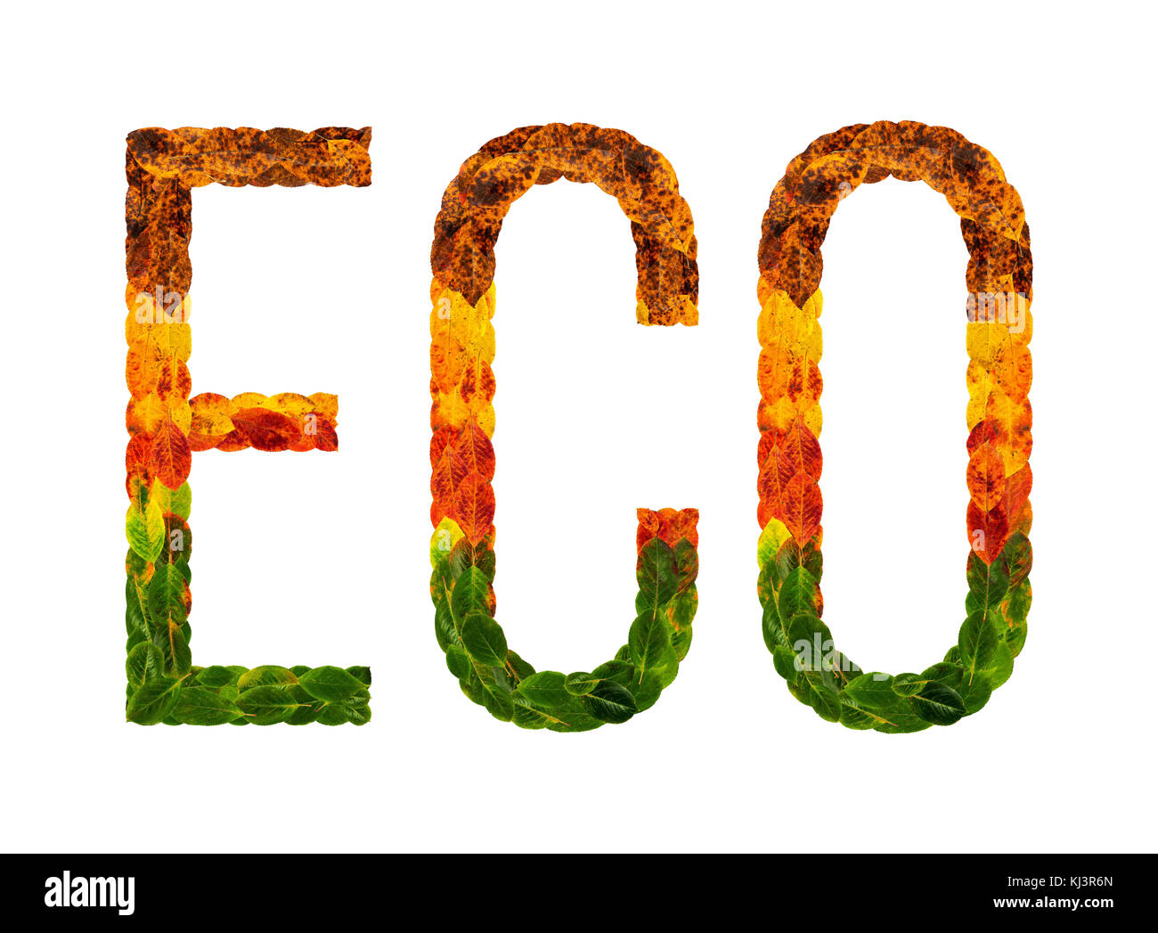 word eco written with leaves white isolated background, banner for printing, creative illustration of colored leaves. - Stock Image