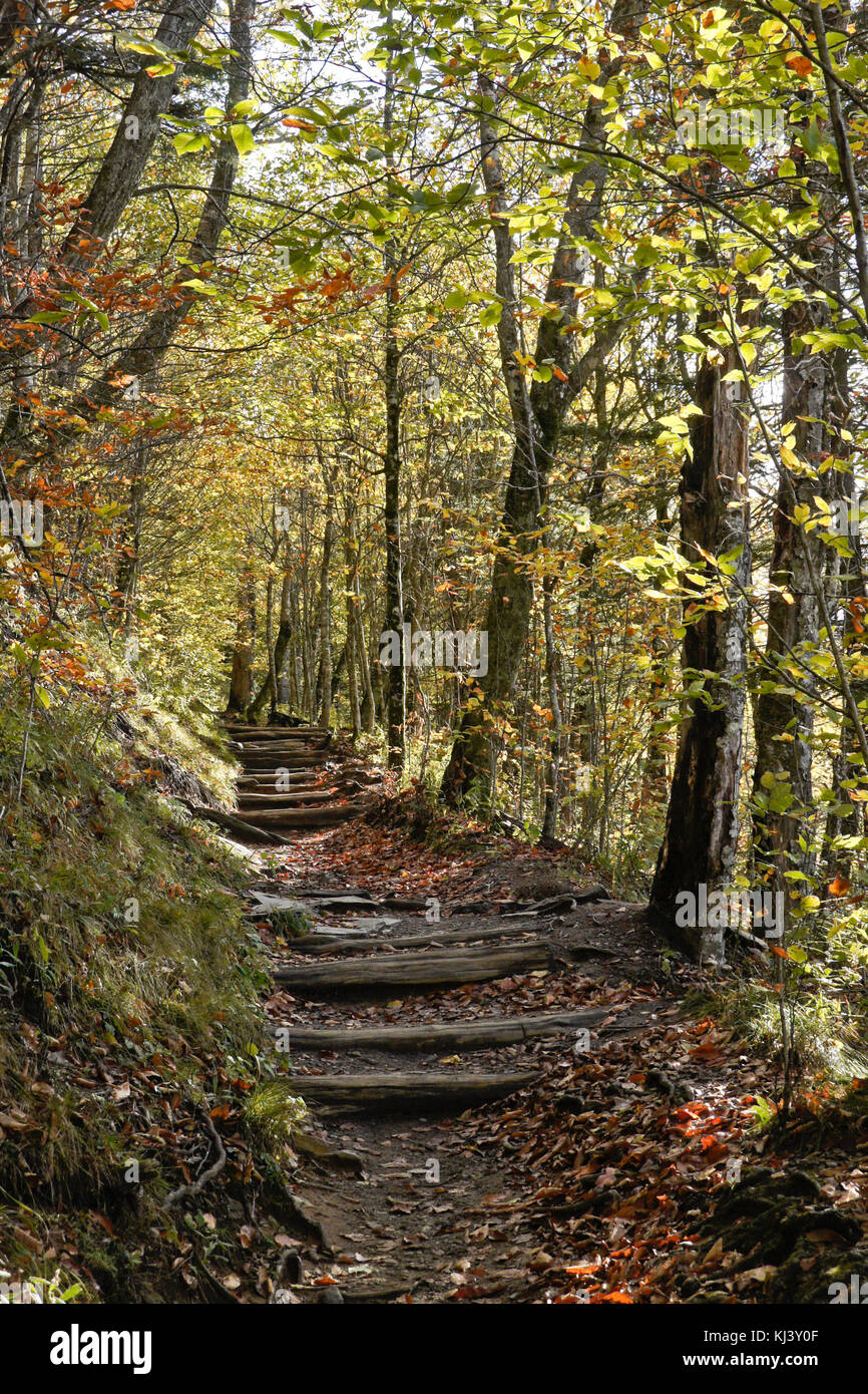 Autumn foliage and a portion of the Appalachian Trail at Newfound Gap, Great Smoky Mountains National Park, border - Stock Image