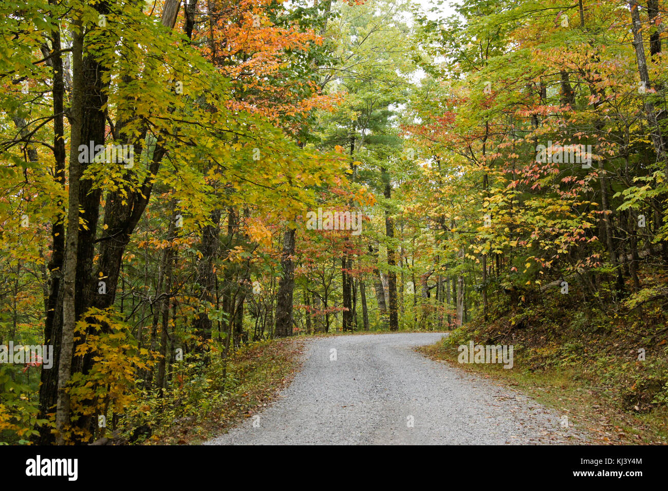 Autumn foliage along Rich Mountain Road out of Cades Cove, Great Smoky Mountains National Park, Tennessee Stock Photo