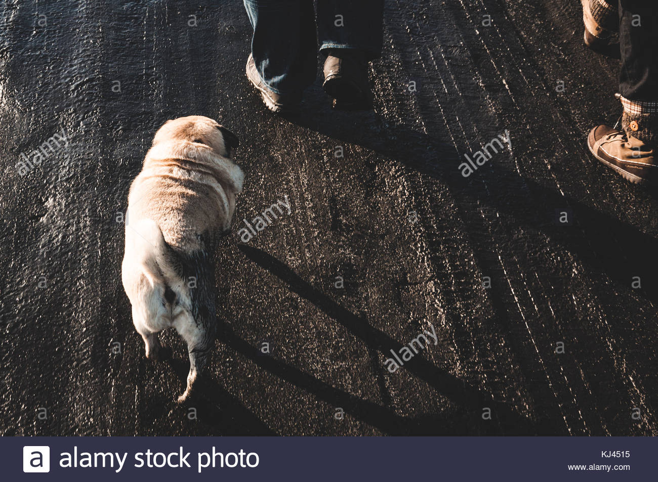 dog walking - Stock Image
