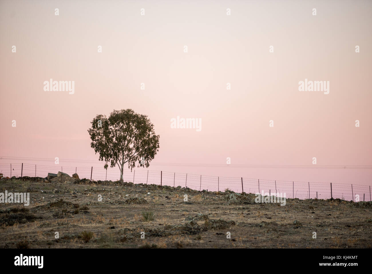 A lonely tree at the top of a hill in the steppe on a sunset background. Cáceres, Extremadura, Spain - Stock Image