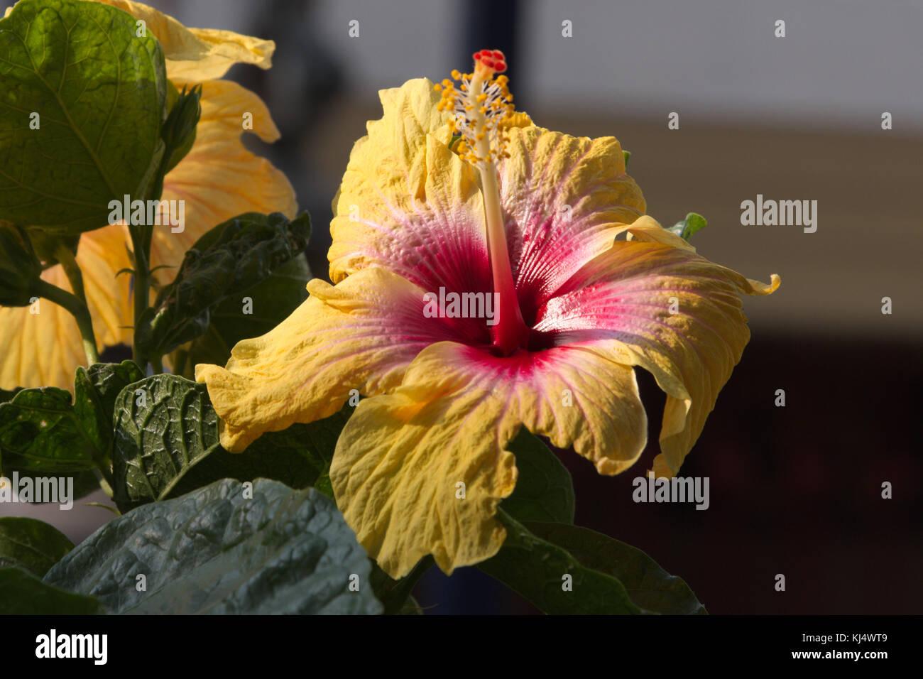 Gurhal Stock Photos Gurhal Stock Images Alamy