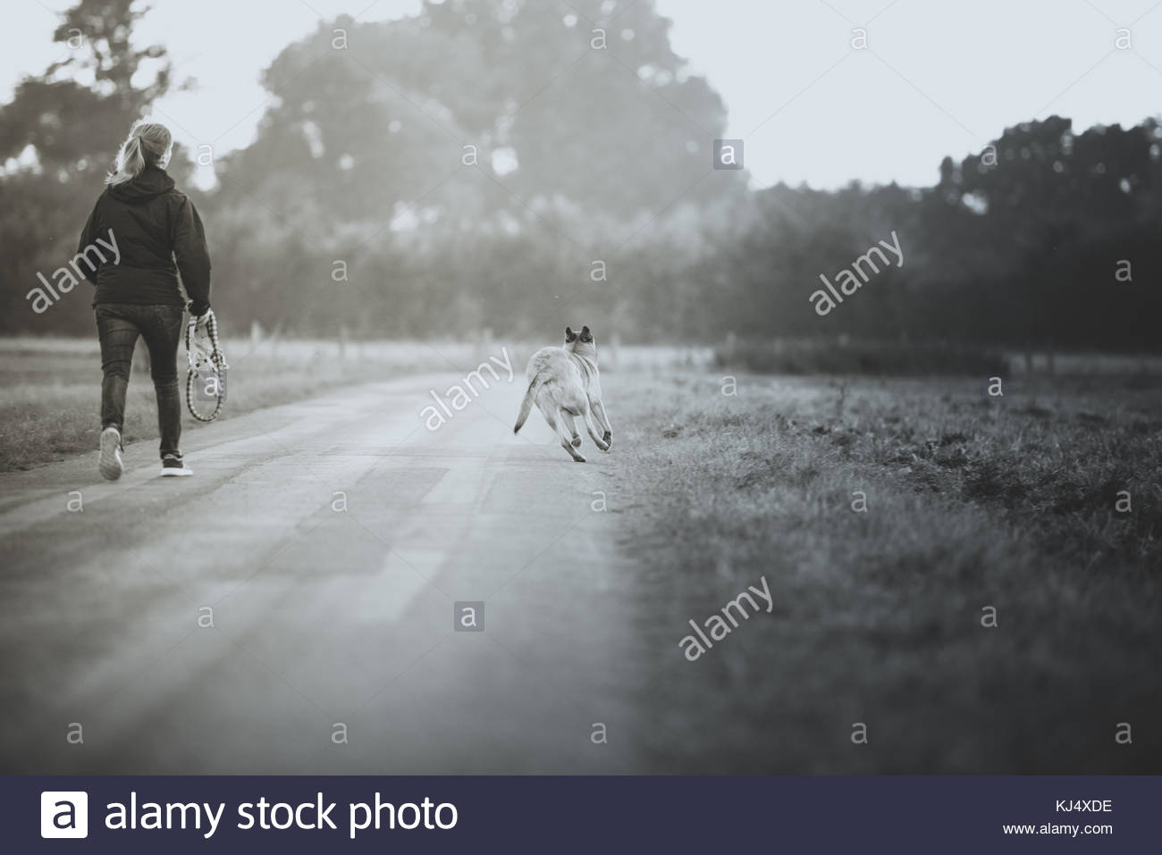Woman walking dog - Stock Image